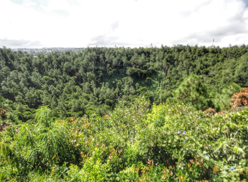 Lush greenery in the crater of the volcano
