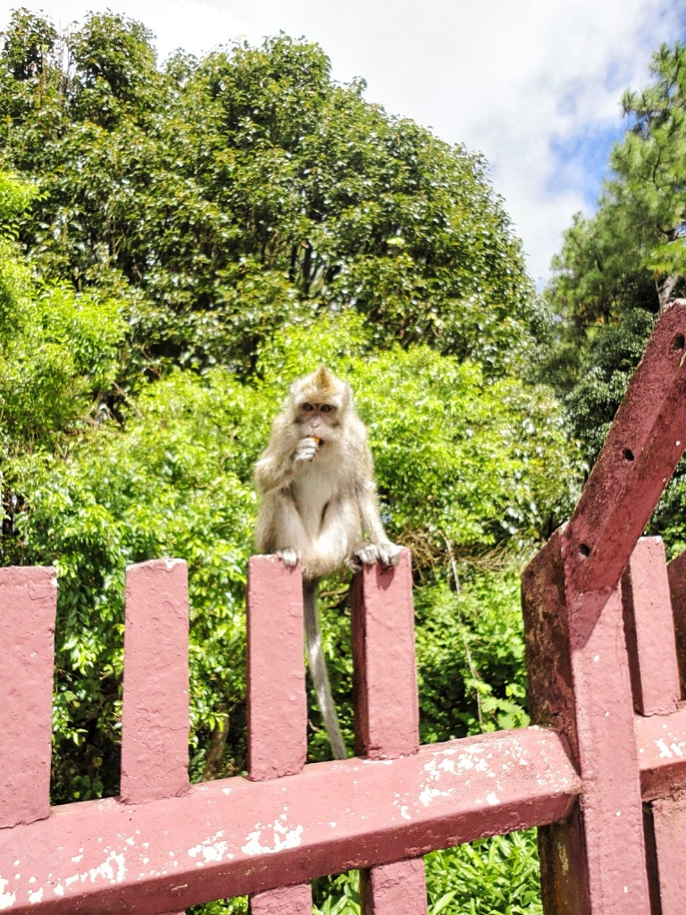 picture of a monkey sitting on the wall
