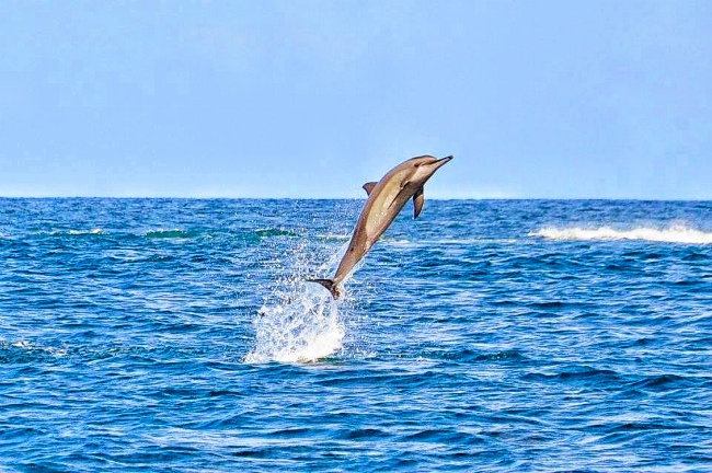 Mauritius Dolphin Flip