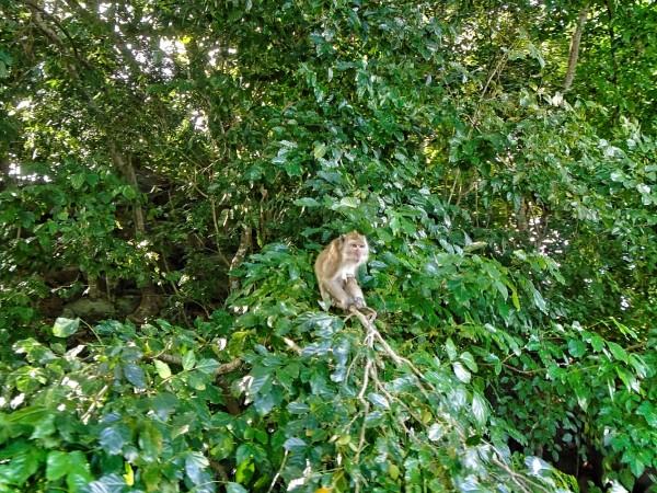 Curious little monkey