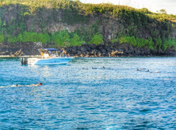 Swimming with the dolphins mauritius