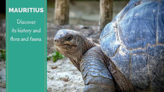 Mauritius History Tour. Exploring flora and fauna